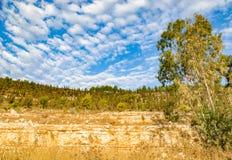 Сухие заводы в природе Стоковые Изображения