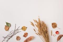 Сухие заводы осени и пук пшеницы с пустым космосом Стоковые Фотографии RF