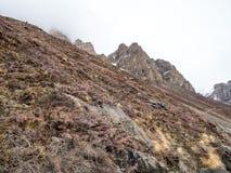 Сухие завод и луг на холме горы в сельской зоне глуши Стоковые Фотографии RF