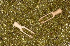Сухие зеленые фасоли mung стоковые фотографии rf