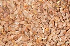 сухие земные листья случайные стоковое изображение