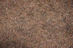 Сухие иглы сосны лежа на том основании Стоковые Фото