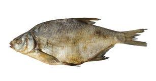 сухие изолированные рыбы Стоковые Изображения RF