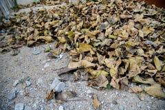 сухие листья земли Стоковые Фото