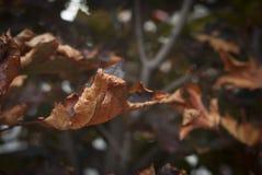 Сухие листья падения осени Стоковые Фото