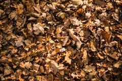 Сухие листья падения стоковое фото