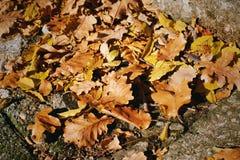 Сухие листья дуба на тротуаре стоковое изображение