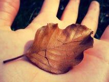 Сухие листья Стоковые Фотографии RF