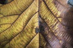 Сухие листья Стоковые Изображения RF