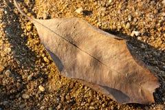 Сухие лист в свете вечера Стоковое Изображение