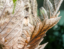 Сухие лист коричневого цвета спада Стоковое Изображение