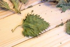 Сухие лист крапивы Стоковые Фотографии RF