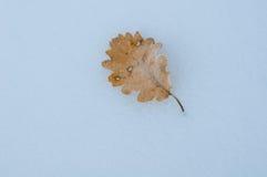 Сухие лист на снеге стоковое изображение