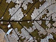 Сухие лист стоковое изображение