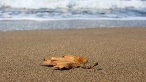 Сухие лист Стоковое Изображение RF