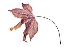 Сухие лист Стоковые Фотографии RF