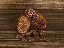 Сухие конусы сосны и конусы ольшаника Стоковые Фотографии RF