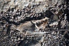 Сухие косточки рыб и перо Стоковые Фотографии RF