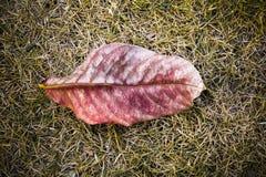 Сухие красные листья на сухой траве стоковая фотография rf