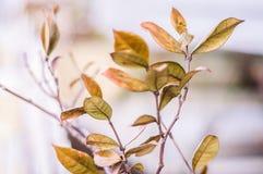 Сухие листья в предпосылке фокуса зимы мягкой Стоковые Фото