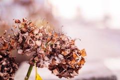 Сухие листья в предпосылке фокуса зимы мягкой Стоковое Изображение