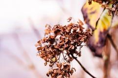 Сухие листья в предпосылке фокуса зимы мягкой Стоковое Фото