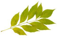 Сухие листья зеленого цвета Стоковое Изображение