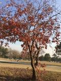 Сухие листья на изображении 3 ветвей Стоковые Фото