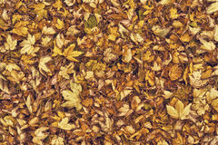 Сухие листья осени как предпосылка Стоковое Фото