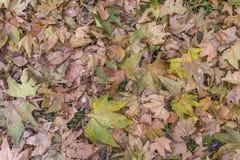 Сухие листья осени леса от парка cit на день освещают как текстура стоковое изображение rf