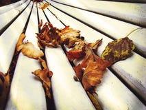 Сухие листья осени на старом белом стенде Стоковое Изображение RF