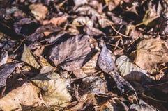 Сухие листья падения осени стоковое изображение rf