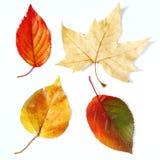 сухие листья падения Стоковые Изображения
