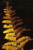 сухие листья папоротника Стоковое фото RF
