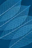 сухие листья прозрачные Стоковое Фото