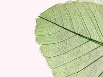 сухие листья Стоковое Фото