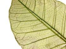 сухие листья Стоковая Фотография