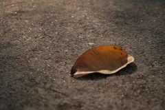 Сухие лист и свет солнца стоковое фото rf