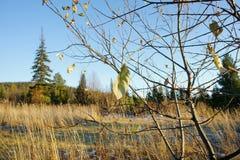 Сухие лист на дереве против предпосылки ландшафта осени Стоковые Фото