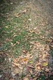 Сухие лист на траве в саде Стоковые Фотографии RF