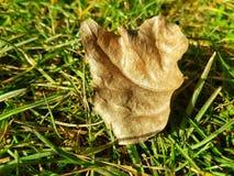 Сухие лист на траве Стоковое Изображение RF