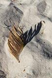 Сухие лист пальмы с текстурой песка стоковое изображение