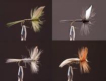 сухие мухы Стоковые Изображения