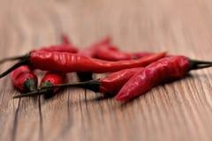 Сухие перцы чилей Стоковые Фото