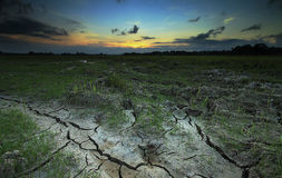 Сухие поле и заход солнца риса Стоковые Изображения RF