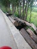 Сухие древесины на том основании Стоковая Фотография