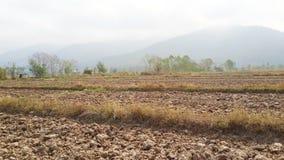 Сухие рисовые поля Стоковое Изображение RF