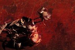 Сухие розы на красном grunge предпосылка Стоковое Фото