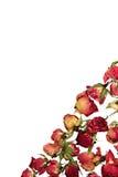 сухие розы открытки приглашения Стоковые Фотографии RF