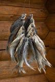 Сухие рыбы на деревянной предпосылке Стоковое фото RF